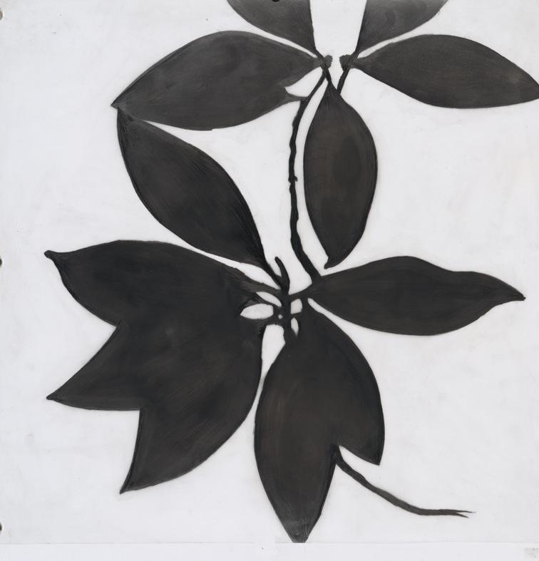 Magnolia, 2007