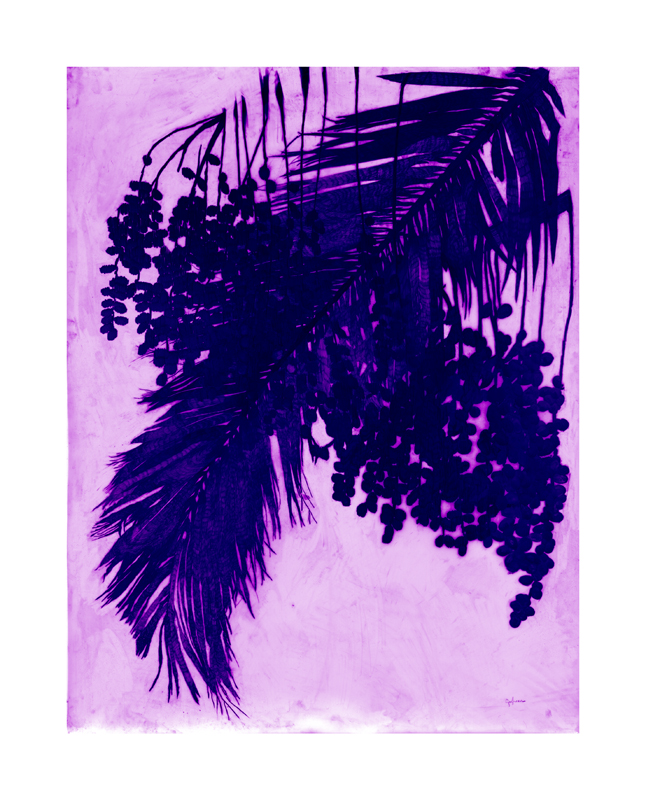 PALMA PÚRPURA (PURPLE PALM), 2012