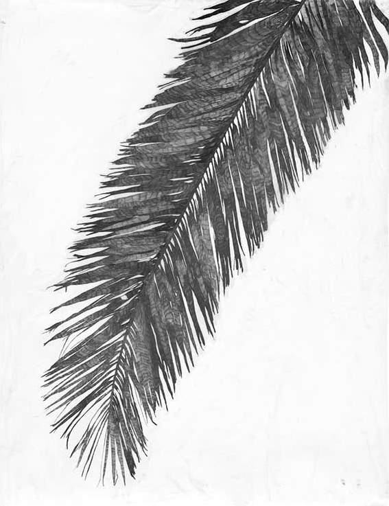 Palm Frond Bending from the Right, 2011