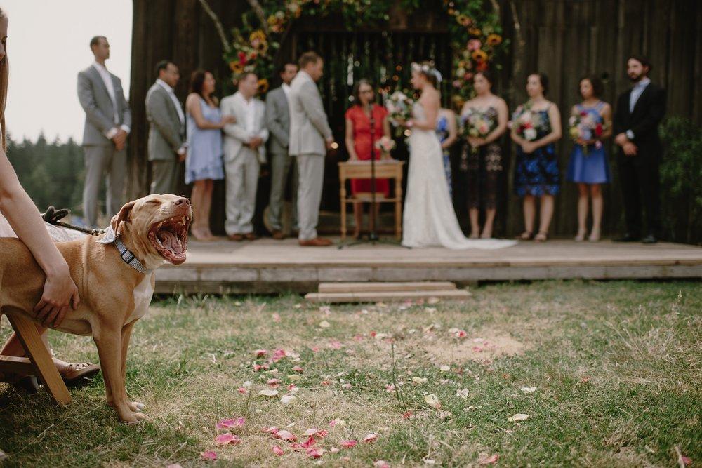 Backyard_Vashon_Island_Wedding_Kristen_Marie_Parker042.JPG
