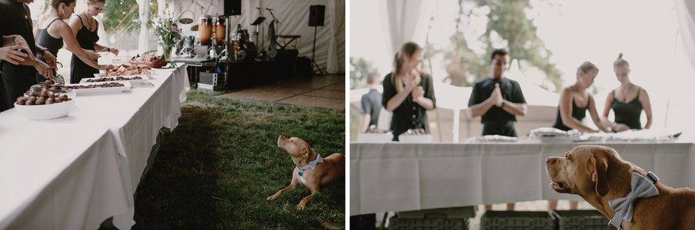 Backyard_Vashon_Island_Wedding_Kristen_Marie_Parker062.JPG