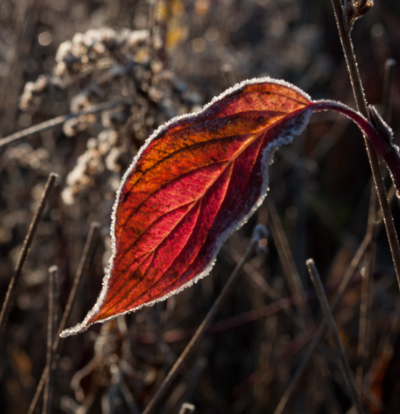 red frost_lookoutmorning-9963.jpg