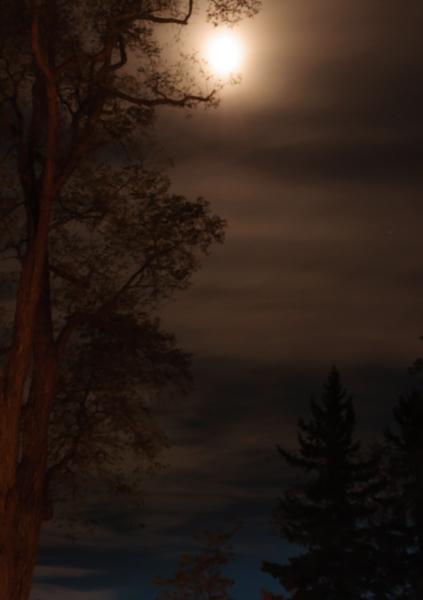 sepia moon_night shoot-9909.jpg