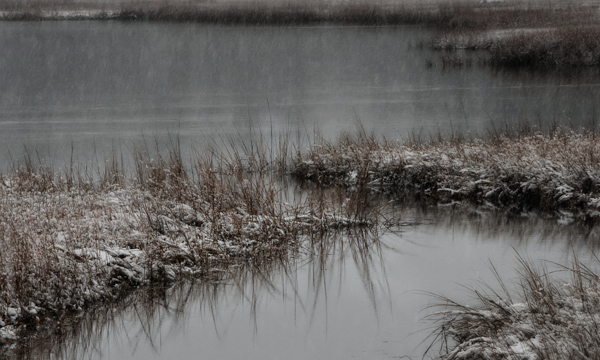 Winter Marsh BRRR_.jpg