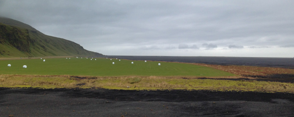 Hay field in the middle of a black sand desert