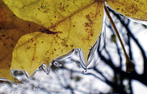 Melting snow and maple leaves through my windshield.