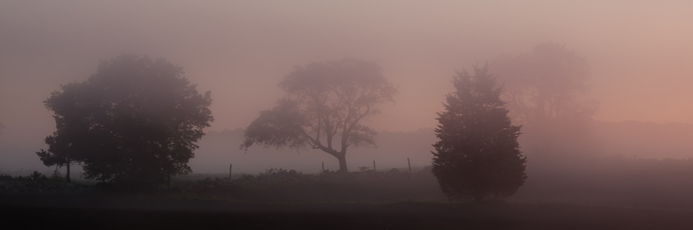 Trees in Purple Mist