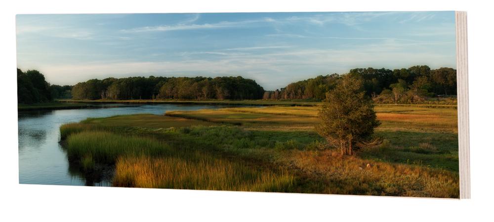 Marsh Cedar Sunrise
