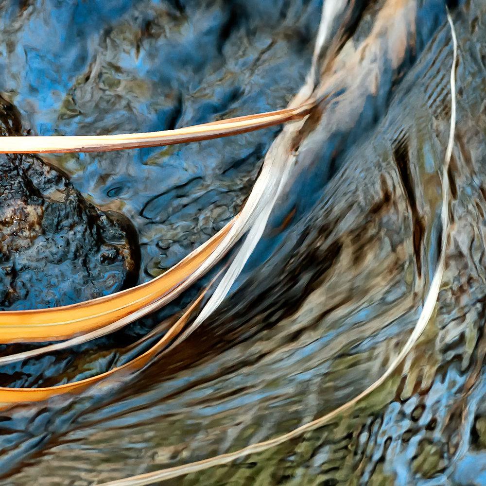 Miscanthus Swirl