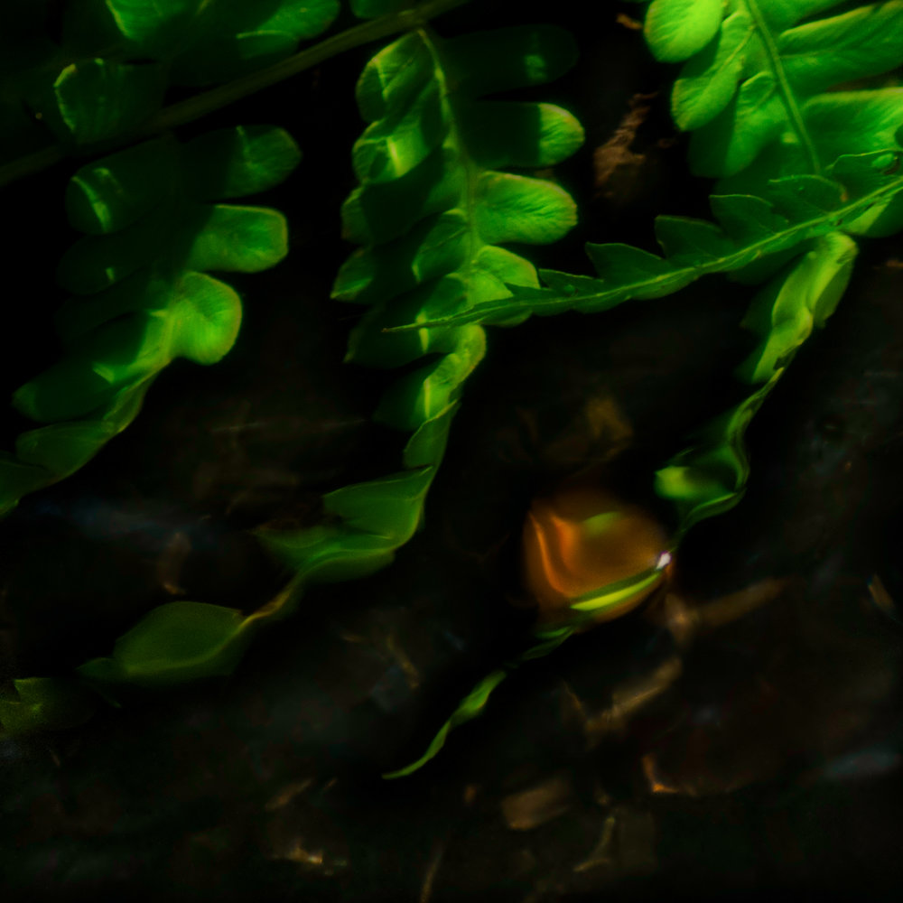 Green Fern Aglow