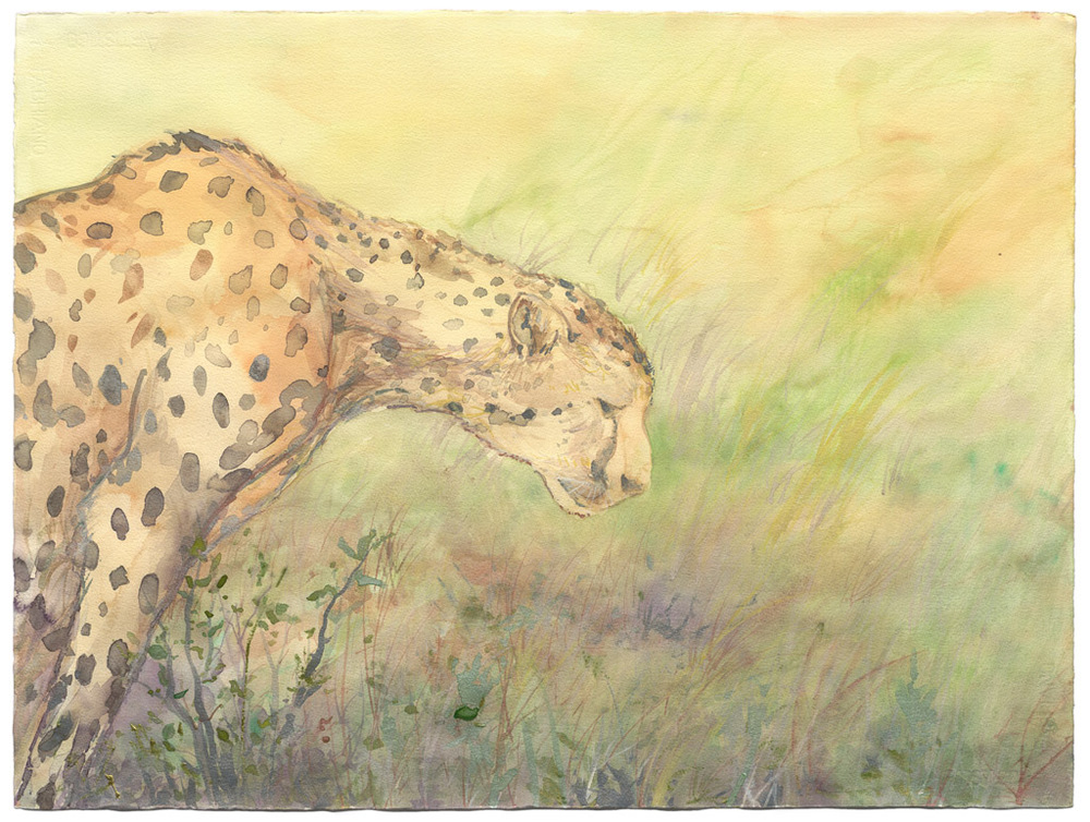 Contemplation of the Cheetah