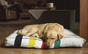 """Glacier National Park Dog Bed"" by Pendleton"