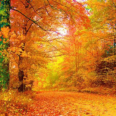 autumn_path_WEB.jpg