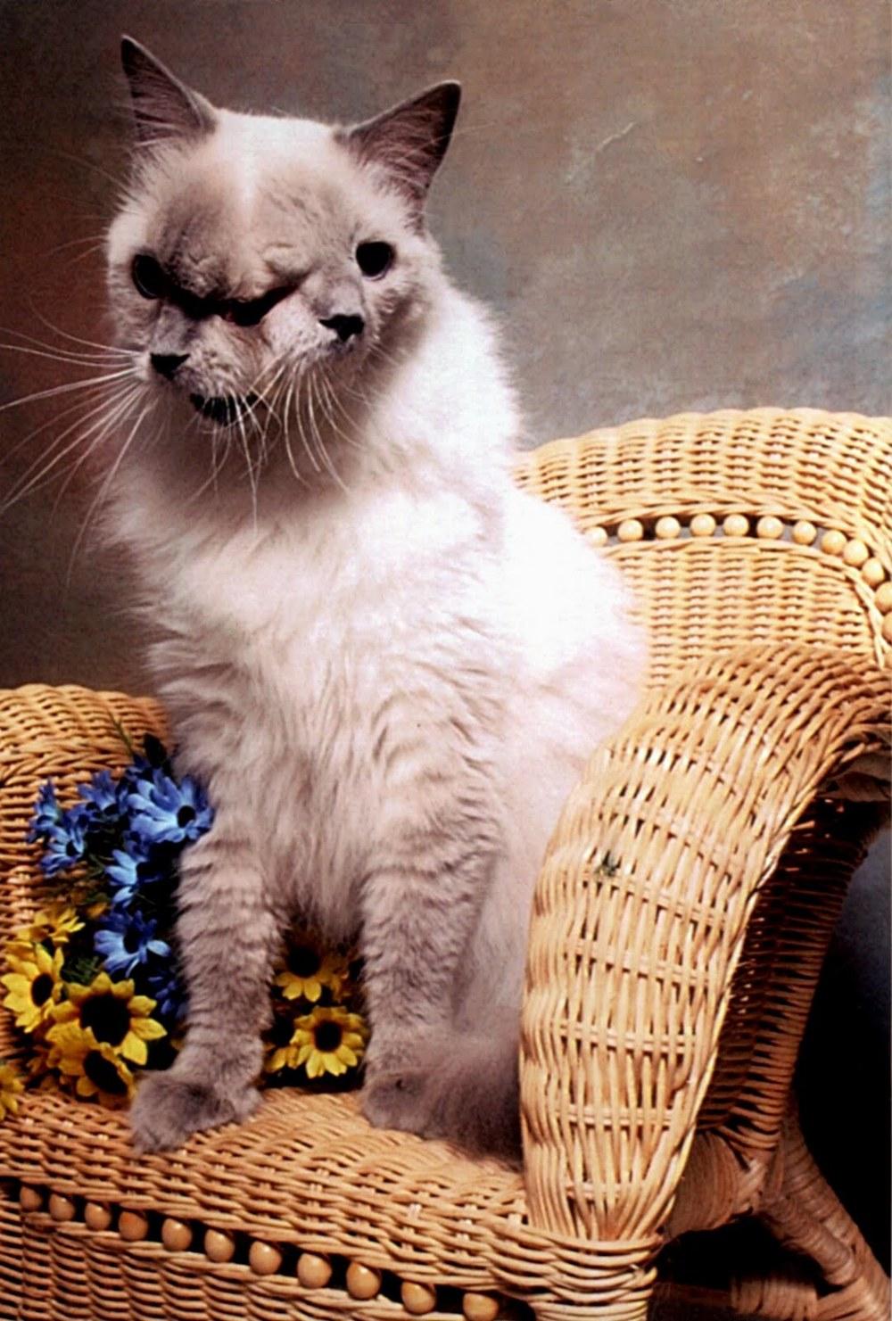 pet cats games