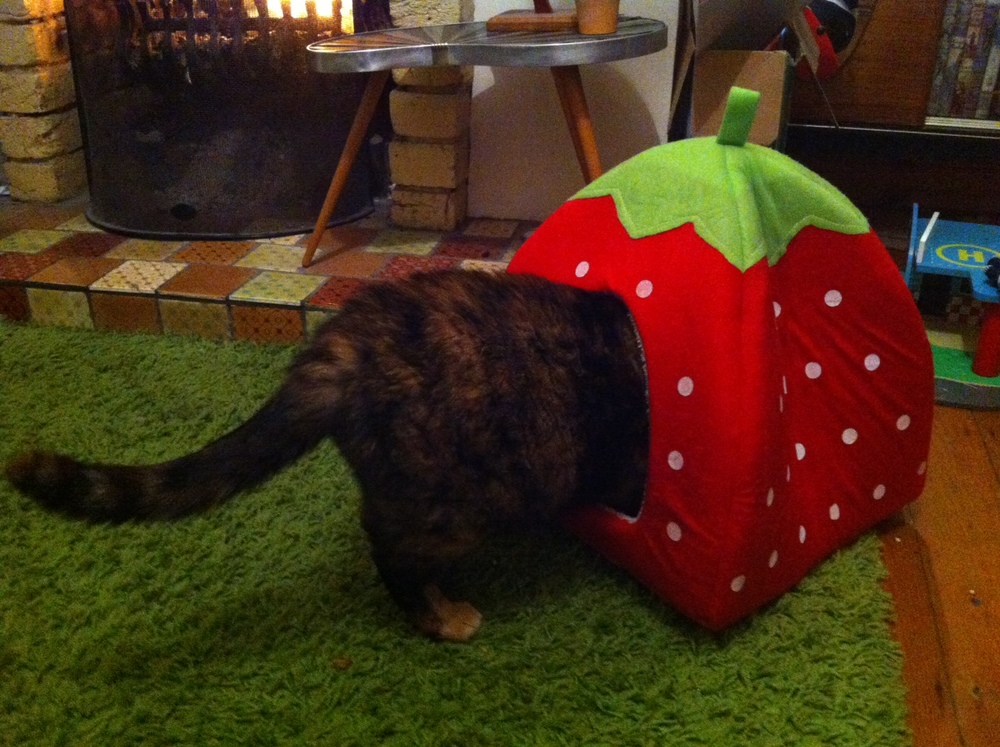 Get Your Cat a Giant Strawberry Shaped Bed