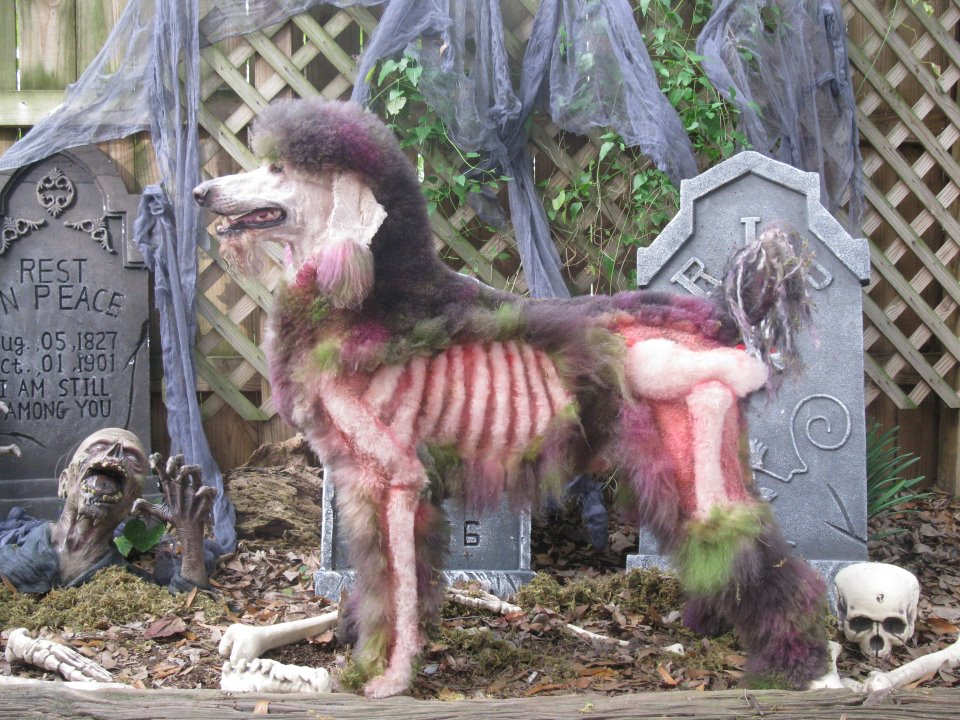 Six Poodles Painted for Halloween