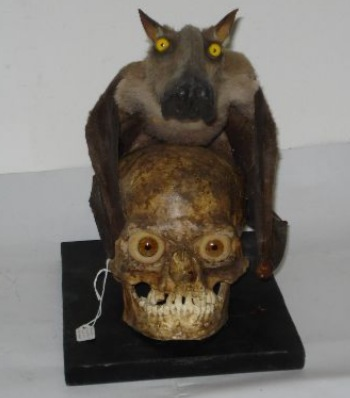 Shocking Taxidermy for your Wednesday Afternoon