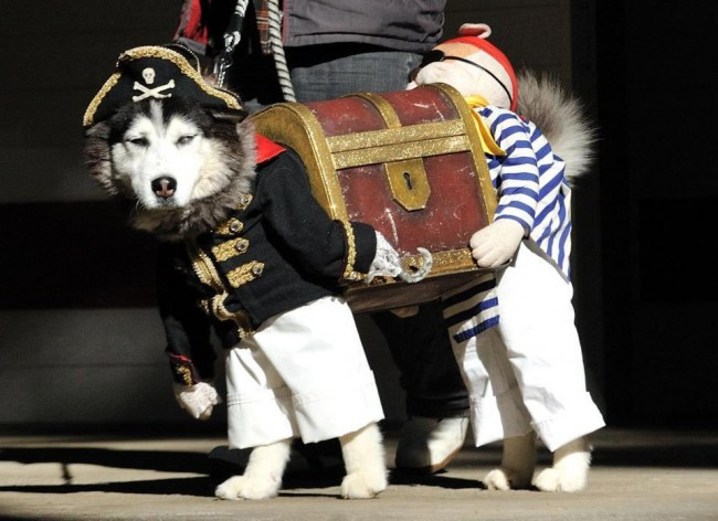 Weirdest Dog Costumes