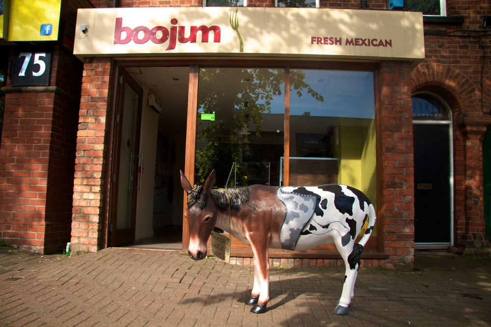 Boojum's Mexican Donkey Parade