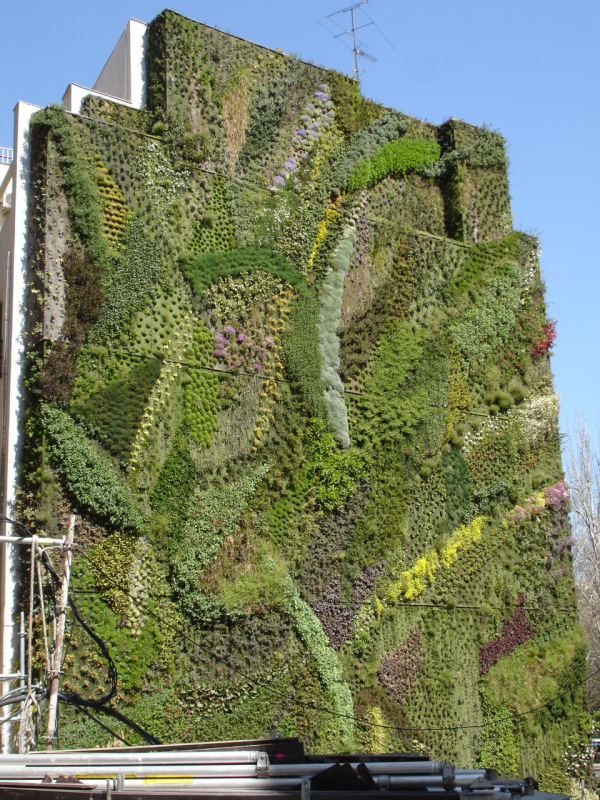 Living Walls - Bringing Greenery to The City