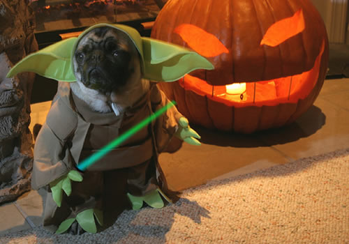Dogs in Star Wars Costumes
