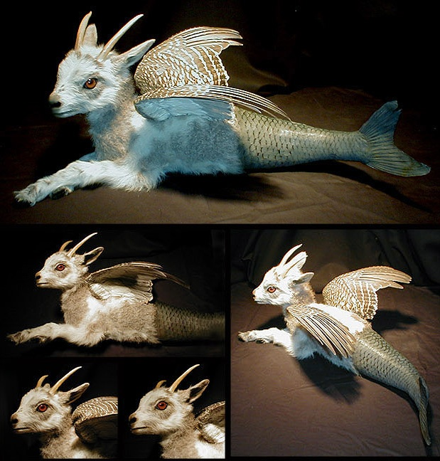 Fantasy Taxidermy, Weird & Wonderful
