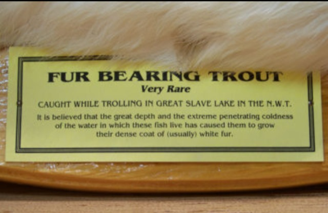 Fur Bearing Trout