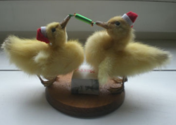 Taxidermy Lover in Your Family? Here's Christmas Sorted