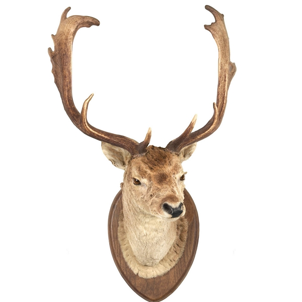 Affordable Faux Taxidermy Stag's Head