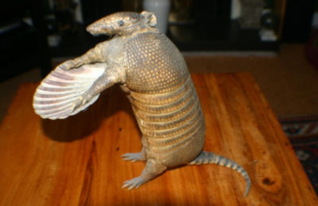 Taxidermied Armadillo Butler