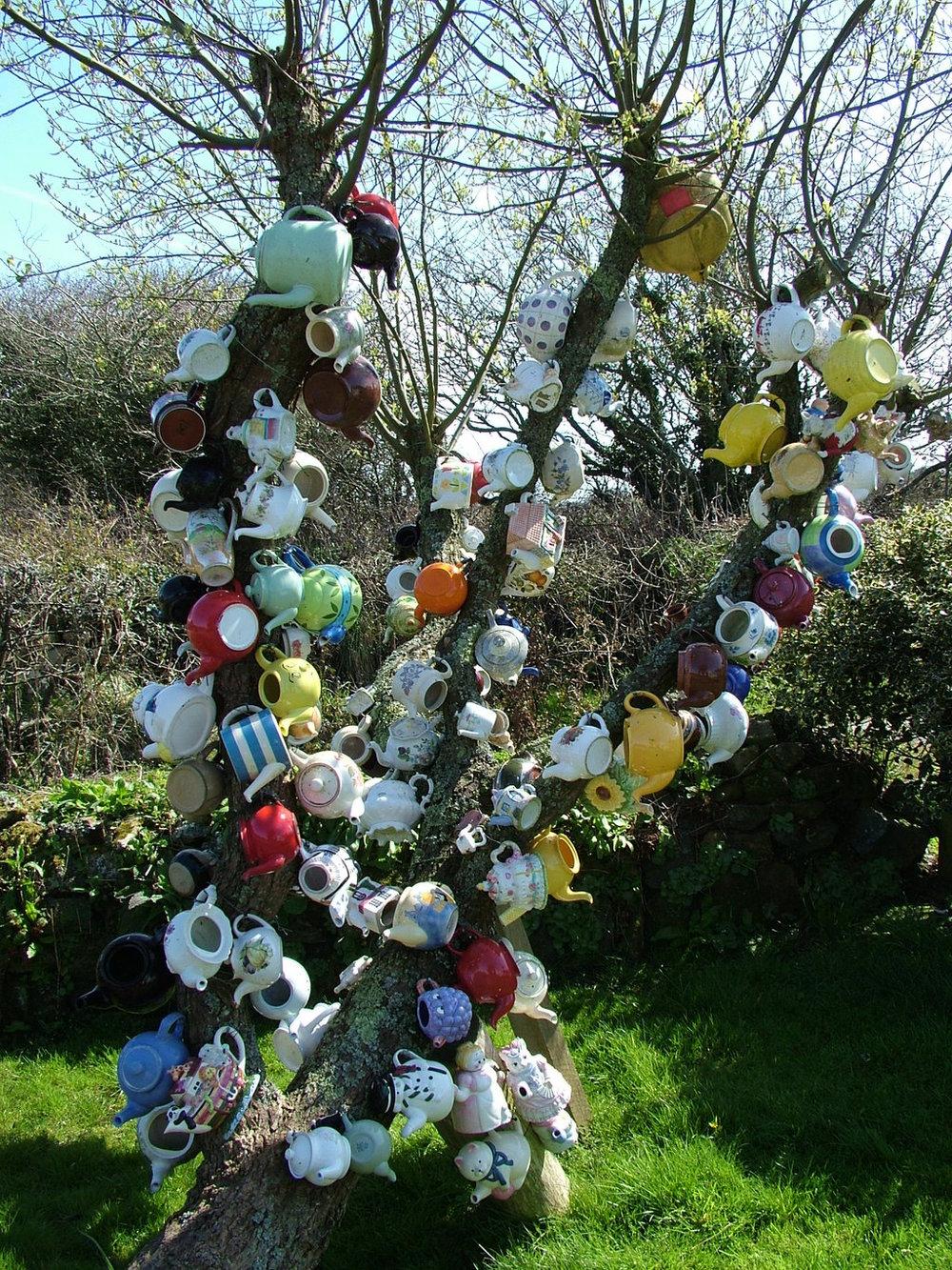 Teapot Tree, Cornwall, England
