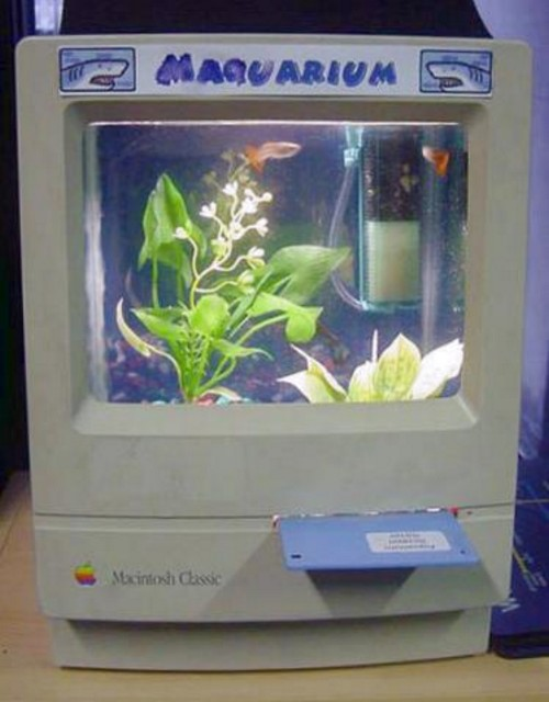Crazy Fish Tanks