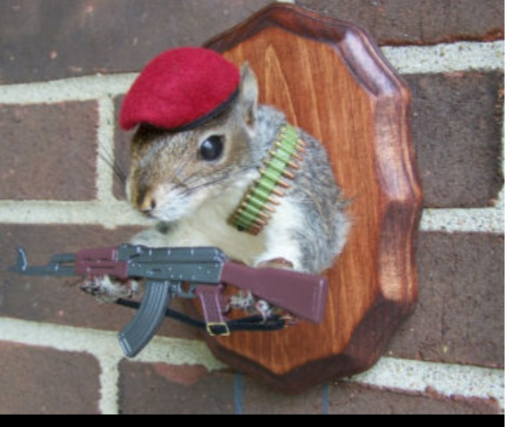 SAS Squirrels