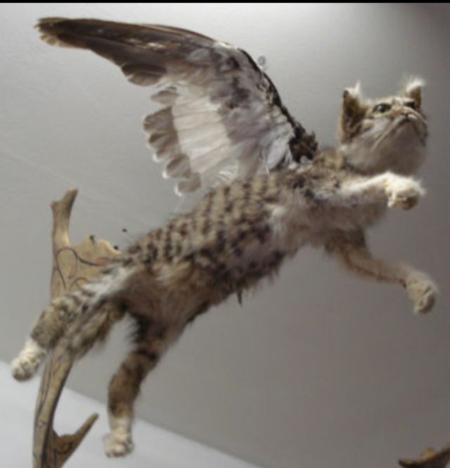 Bizarre Taxidermy Saturday Special WINGED CATS