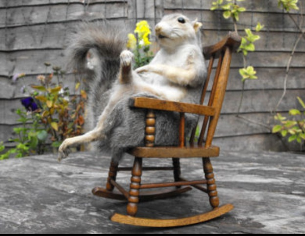 Squirrel in a Rocking Chair & Hoof Rack