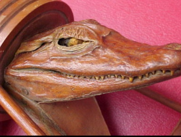 HORRIFIC Taxidermy Crocodile Umbrella Stand