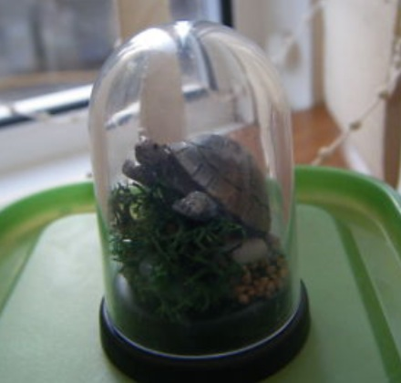 Dolls' House Taxidermy Domes
