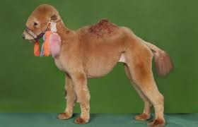 Poodles Disguised as Other Animals