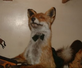 The Gentleman Fox Taxidermy - my Tattoo in real... life