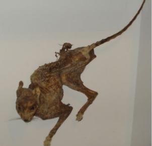 Mummified Cat and the Weekly Creepy Taxidermy
