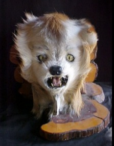 Scary Taxidermy Saturday Part One