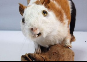 It's Grotesque Taxidermy Saturday!