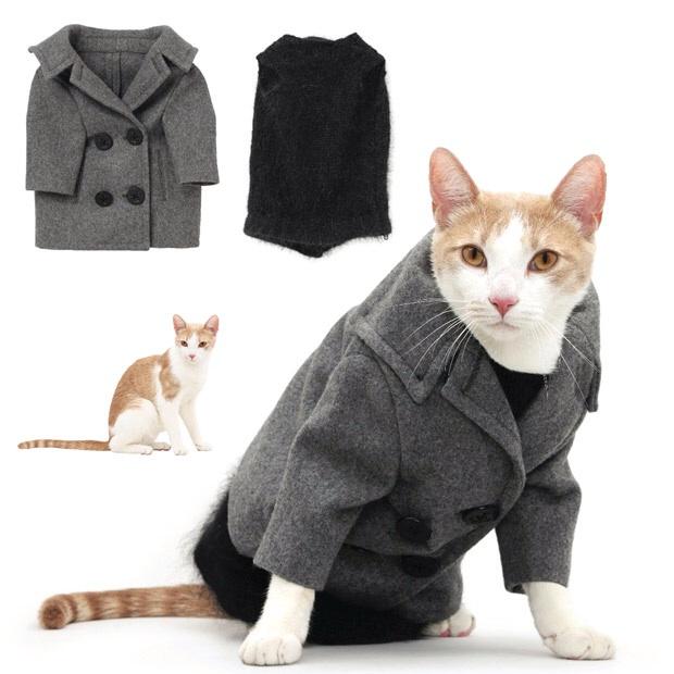 Как сделать платье для котенка