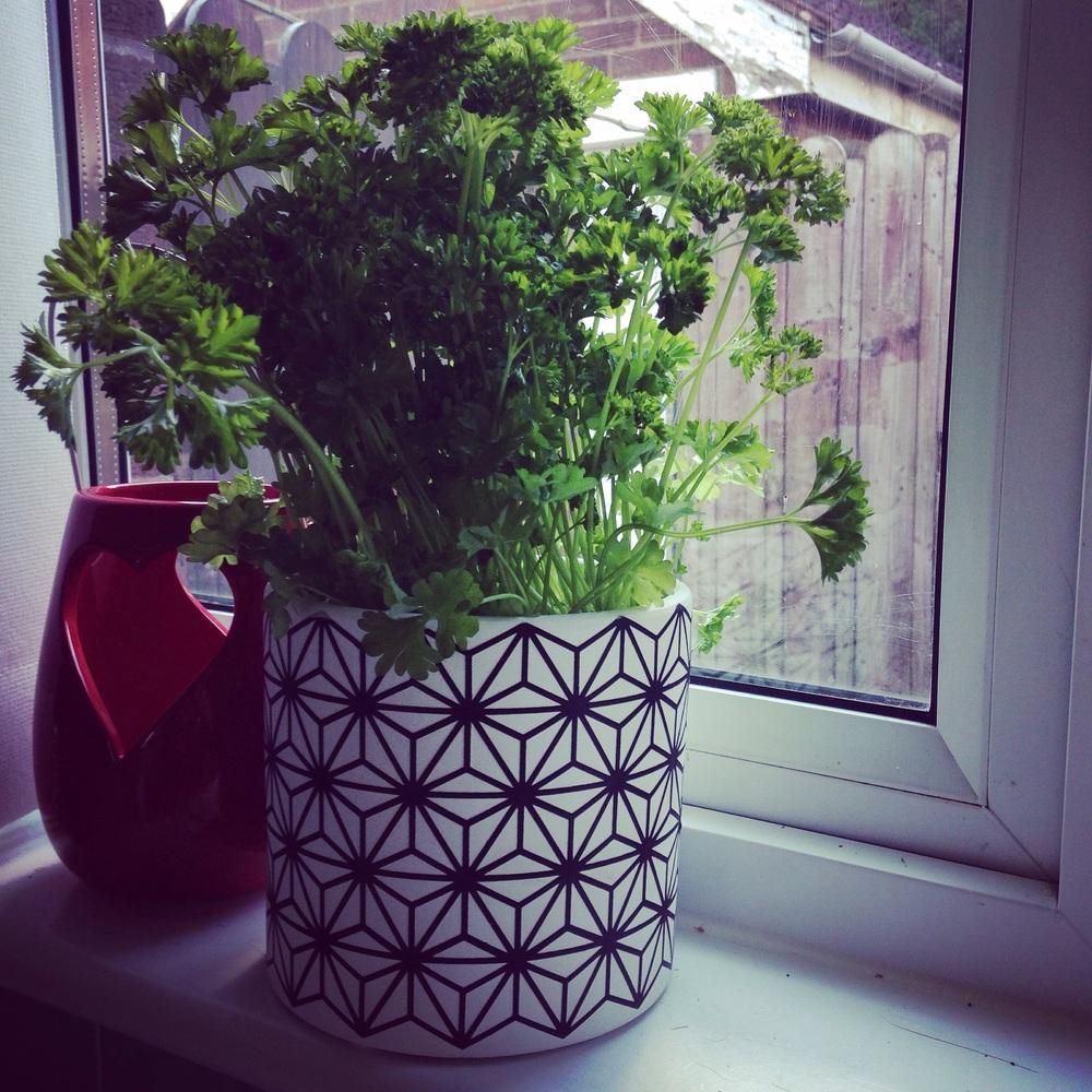 £2.99 pot, 89p Parsley plant