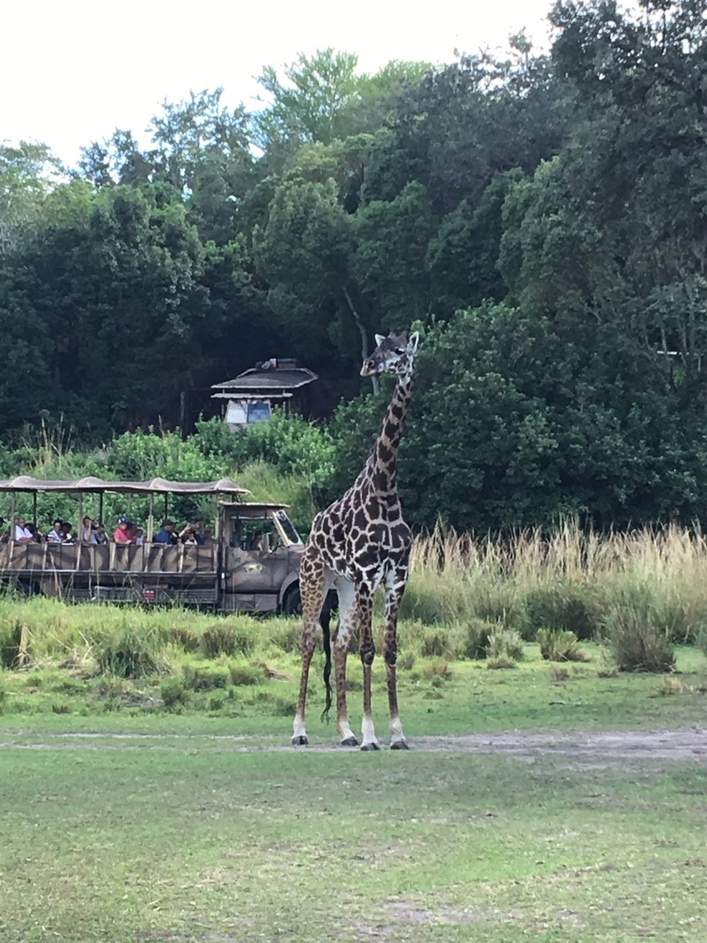 A.K. Safari Tour