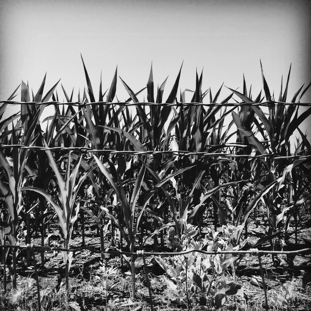 Barriers and a Cornfield, Somewhere in Nebraska, 2016, (c) Heidi Jeub
