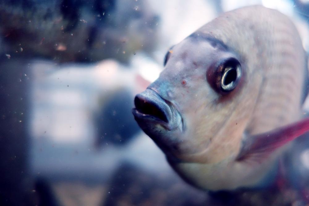 DSC00657 Ugly Fish.JPG