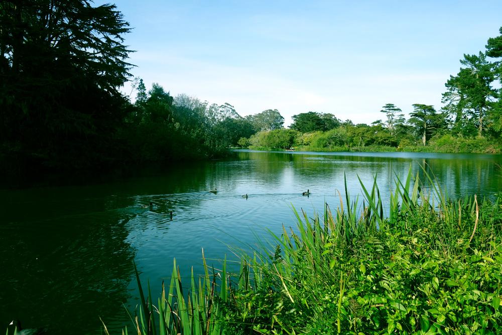 DSC00751 Duck Lake.JPG