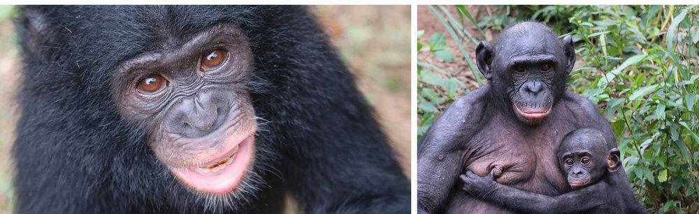 5_BonoboImages.jpg
