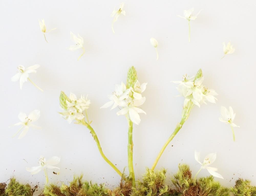 leanne wei flower art
